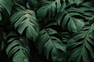 گل و گیاه دکوراسیون کلینیک دندانپزشکی